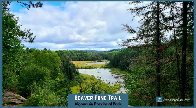 Beaver Pond Trail Guide – Algonquin Provincial Park