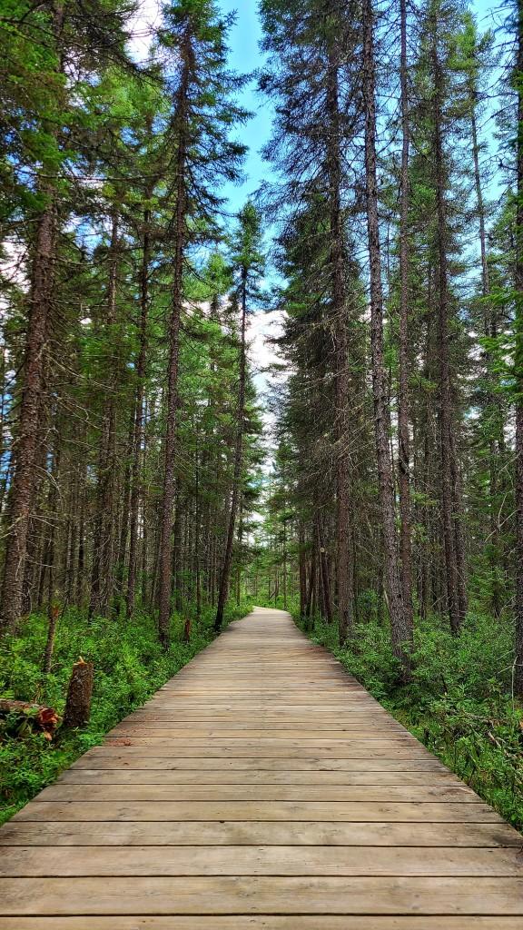 Spruce Bog Boardwalk Trail, Algonquin Park
