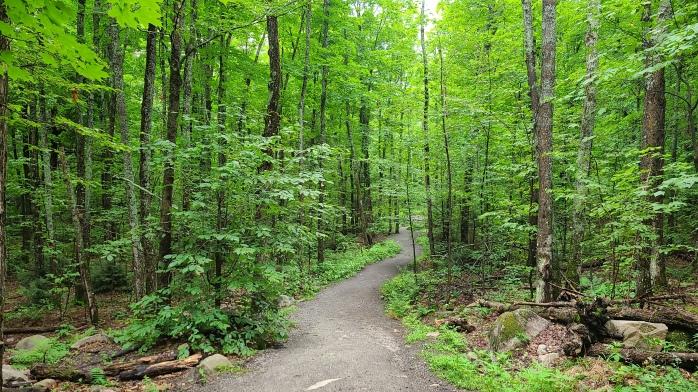 Lookout Trail Algonquin Park