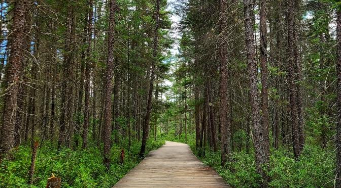Spruce Bog Boardwalk Trail Guide – Algonquin Provincial Park