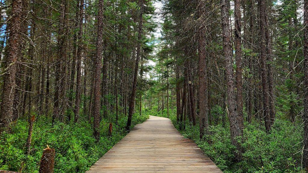 Spruce Bog Boardwalk Trail, Algonquin Provincial Park. The Top 5 Ontario Travel Destinations in 2021.